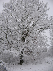 Winterlandschaft in der Oberpfalz