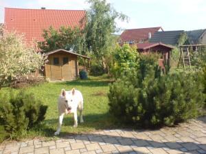 Rasenfläche gepflegt - Anja Bergler