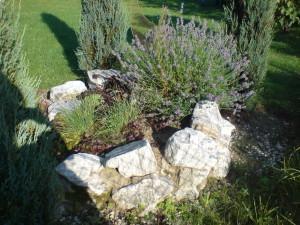Gewürzbeet im Garten - Anja Bergler