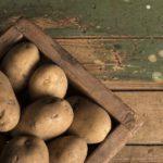 die Kartoffeldiät